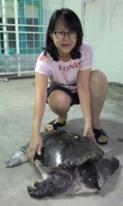 The Lady Rescuer, Serene Voo Nyuk Wei and the rescued freshwater turtle. Photo credit: Sabah Wildlife Department and Danau Girang Field Centre.