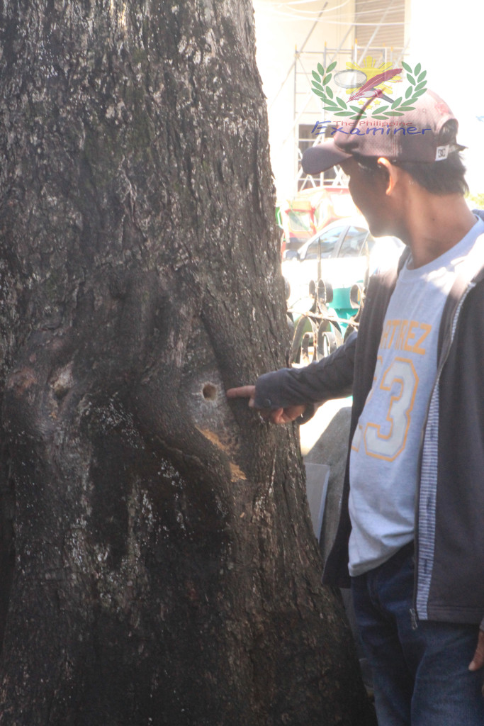 Tabaco City ENRO head: The trees were extra judicially poisoned